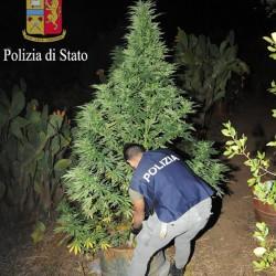 piantagione scoperta e distrutta dal personale della Polizia ad Orgosolo