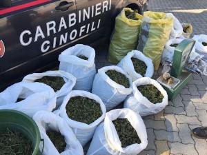 opeazione antidroga dei carabinieri di iglesias