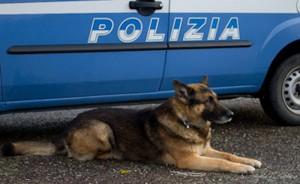 cane antidroga della Polizia di Oristano
