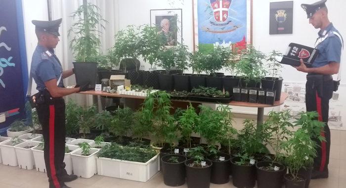 piante marijuana con cc comp alghero