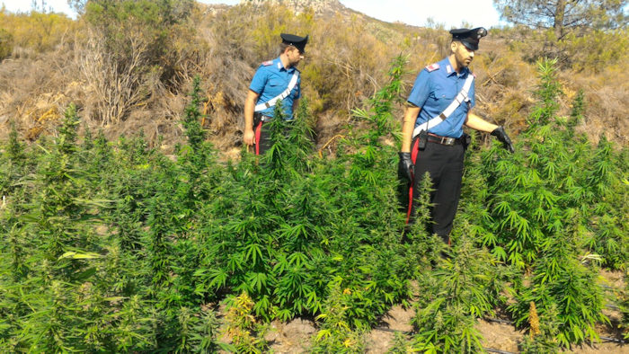 Carabinieri bonorva scoprono piccola piantagione
