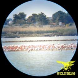 Salvaguardia dei siti di nidificazione avifauna protetta