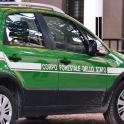auto forestali